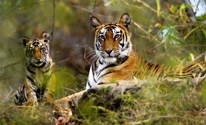 15 Days Wildlife Tour Of India
