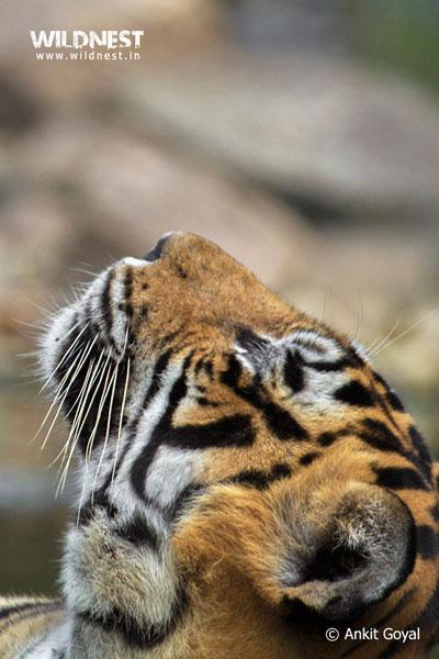 India – A Wildlife Heaven Tour