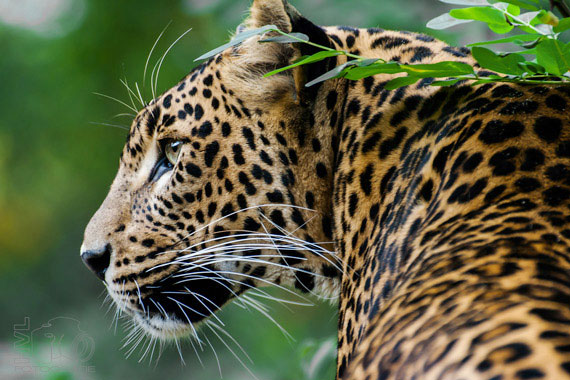 Odisha Wildlife Tour