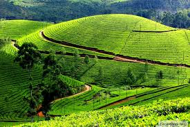 Coorg Package Rs.3,999/- Every Sat Departure Ex. Bangalore Travel Agents Best Tac