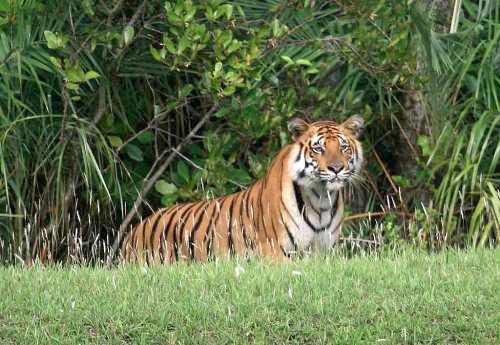 Sundarbans Package 2 Night 3 Days Tour