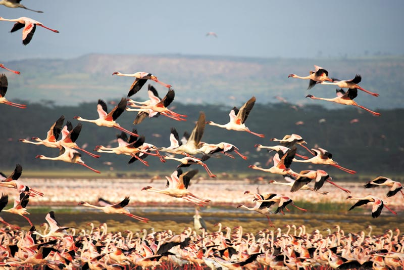 4-Days Lake Nakuru & Maasai Mara Safari Tour