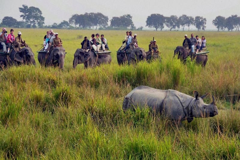 Assam With Wildlife Package