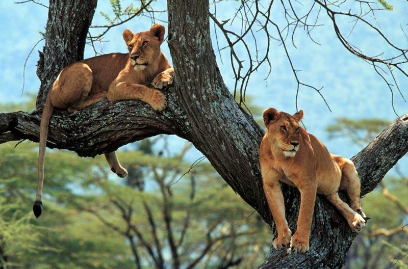 Best Of Tanzania & Zanzibar - 12 Days / 11 Nights Every Saturday Tour