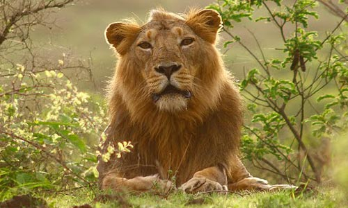 Best Of Gujarat Tour With Wild Life Of Gir And Temples Of Somnath