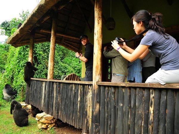 Uganda And Rwanda Primate, Gorilla Tracking And Game Viewing Tour