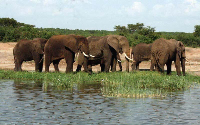 10 Days Uganda Safarii Tour