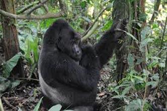 4 Days Lake Mburo And Bwindi Forest National Park Tour