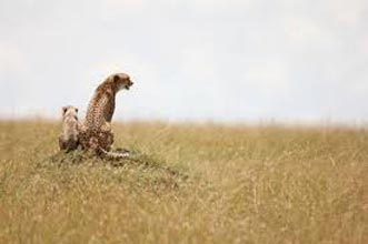 3 Days Masai Mara Safari Kenya Tour