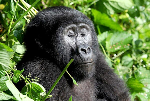 3 Days Uganda Gorilla Safari Tour