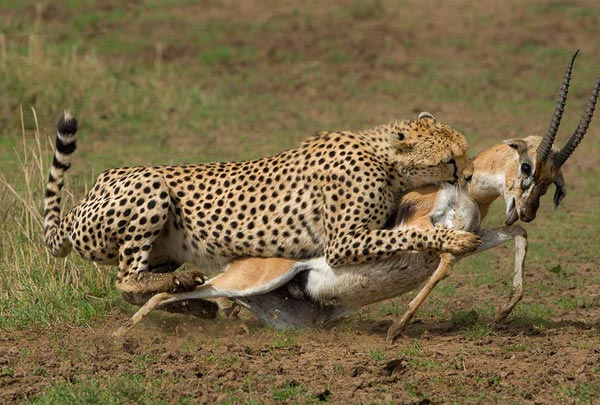 Masai Mara Safari Package