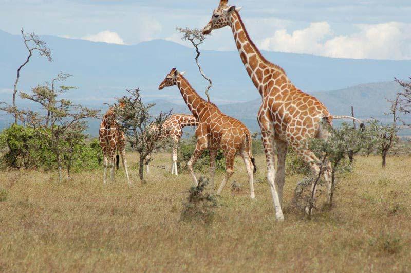 Enchanting Kenya Safari Package