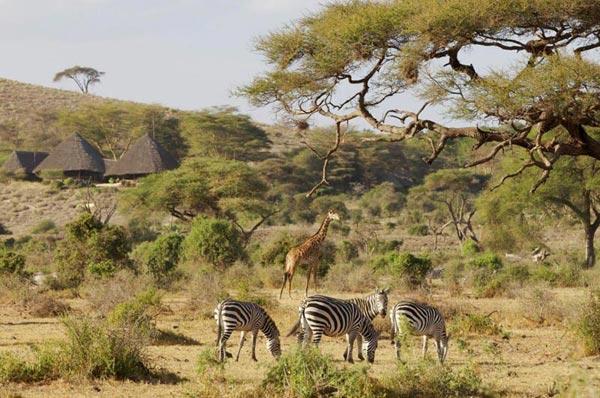 Aberdare National Park Safari Package