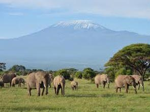 Amboseli Experience Package