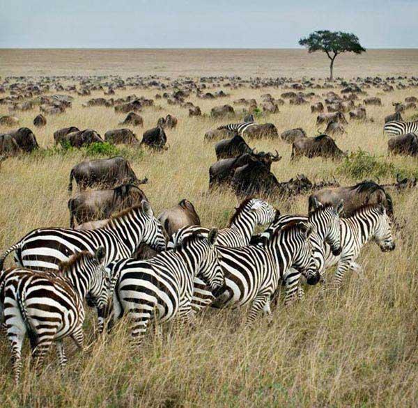 Masai Mara Easter Experience Safari Package