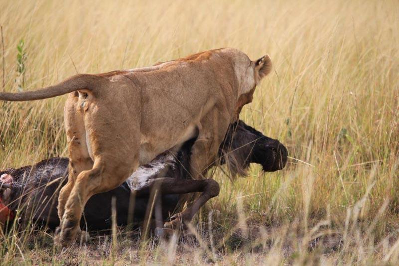 Masai Mara Unleashed Safari Package