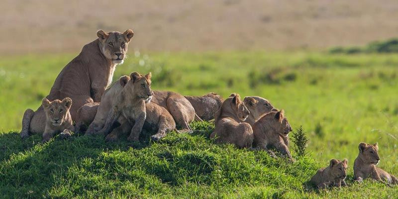 Kenya Wildlife And Beach Safari Package