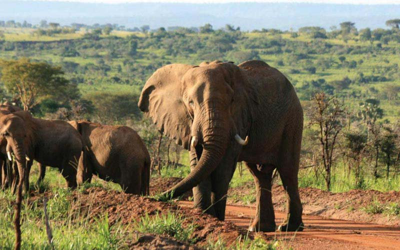 Murchison Falls And Queen Elizabeth National Park Safari Package