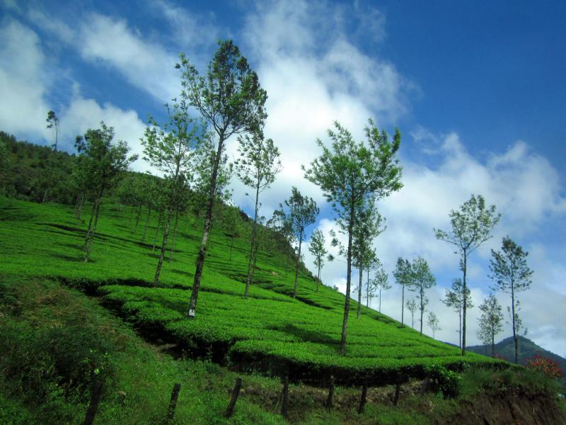 Kerala Hill Station Package 5 Days