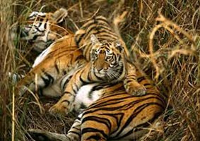 Kolkata Shantiniketan And Sundarban Forest Tour