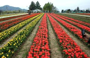 Exotic Kashmir Tour Packages