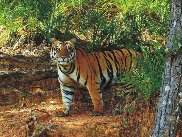 Satkosia Wildlife Sanctuary Tour