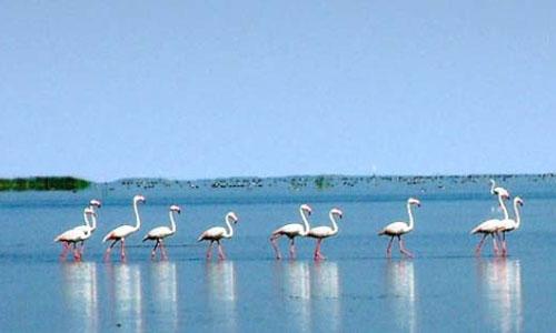 Chilika Lake Tour