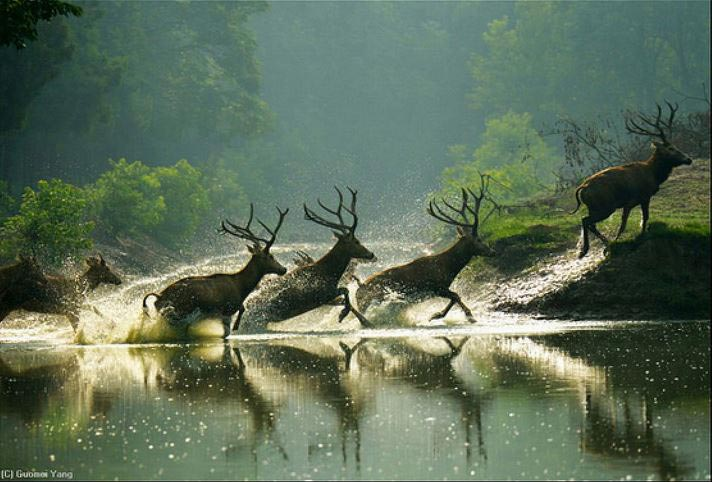 Golden Triangle And Wildlife Special Package