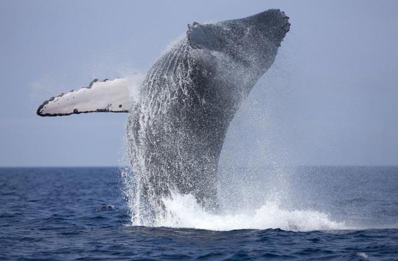 Whale Watching In Sri Lanka 5D/4N Tour