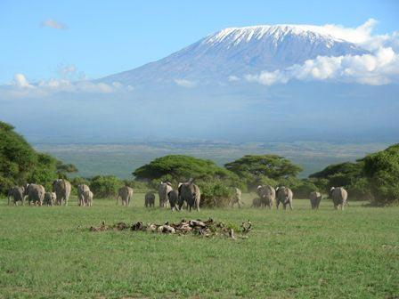 Kibo Safari - Amboseli/Naivasha/Masai Mara Tour