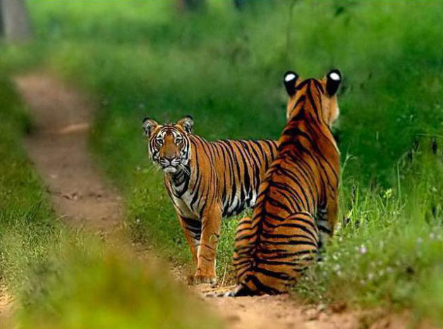 Kabini, Bandipore,Madhumalai National Park ,With Ooty Package