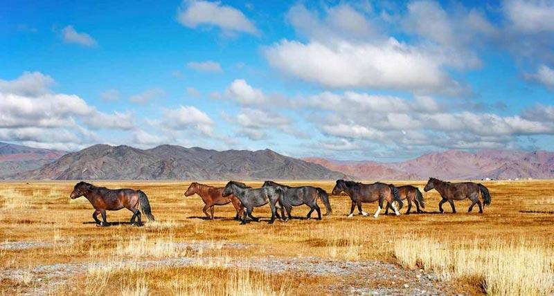 Russia - Trans Siberia - Mongolia Tour