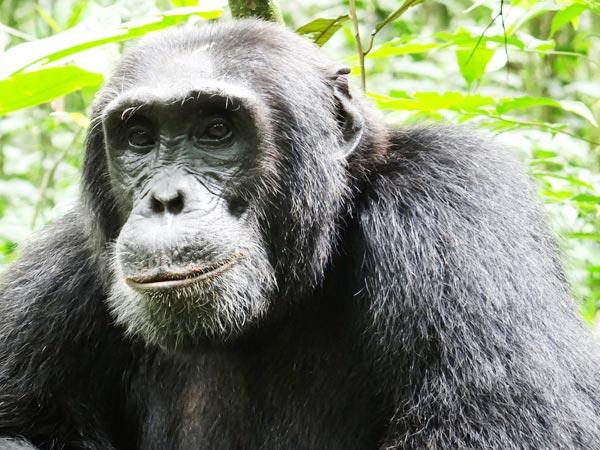 Short Safari In Uganda Package