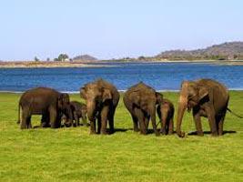 Ultimate Sri Lanka Tour