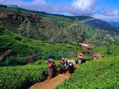 Honeymoon In Sri Lanka Tour