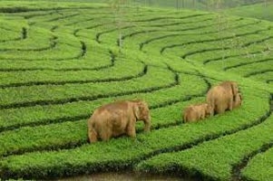 Munnar Blackberry Hills Enchanting Honeymoon Package.
