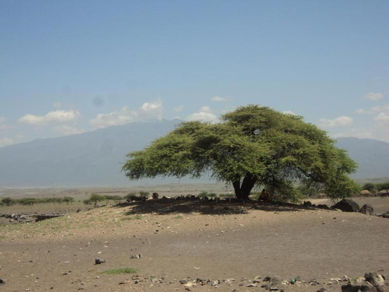 Ngorongoro Crater Highlands Trekking Tour