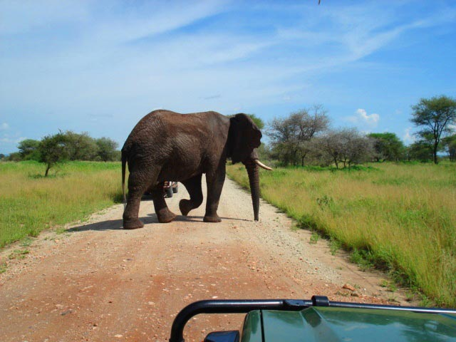 Northern Circuit Safari Tour