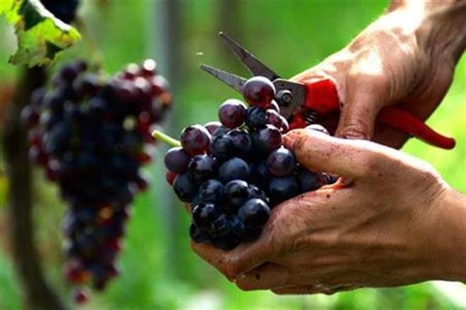 Wine & Grapes Tour