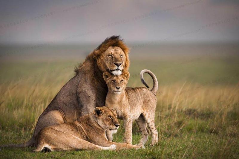 Classic Kenya And Tanzania Safaris Tour