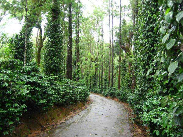 Coorg Tour Package For 3 Nights - 4 Days