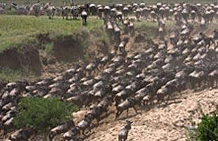 5-Day Kenya Wild Adventure Safari Tour