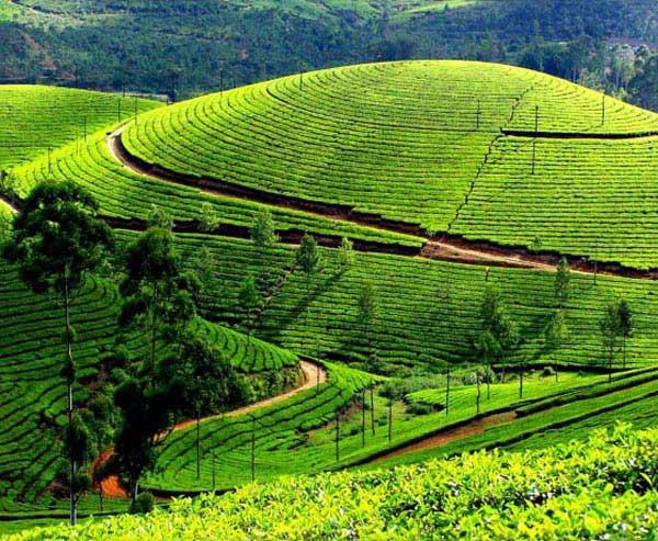 Compelling Kerala Tour