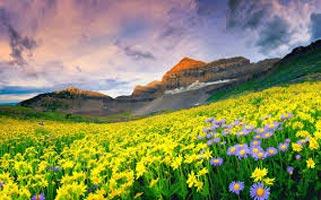 Valley Of Flowers Trek Package