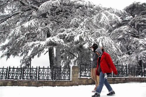 Delhi To Shimla Tour(3 Days/2 Night)