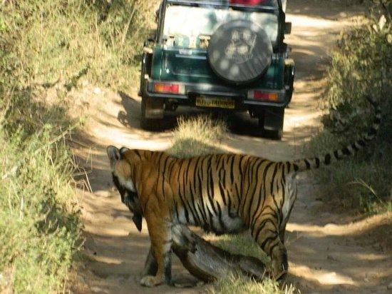Temple & Tiger Safari - Madhya Pradesh Tour