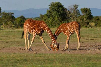 East Africa Wildlife Safaris Tours Package