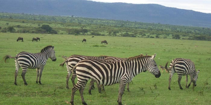 8 Days Budget Kenya Safari Package