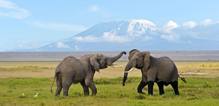 7 Days Amboseli, Lake Nakuru And Masai Mara Kenya Safari Package