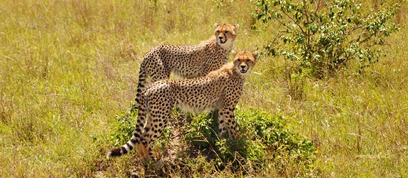 8 Days Kenya Beach Holiday And Safari Package